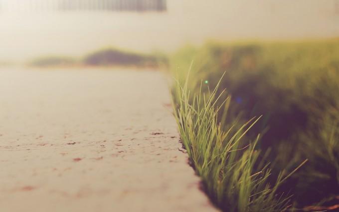 grass wallpaper photography