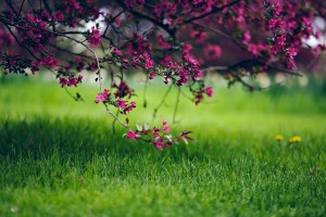 grass wallpaper stunning