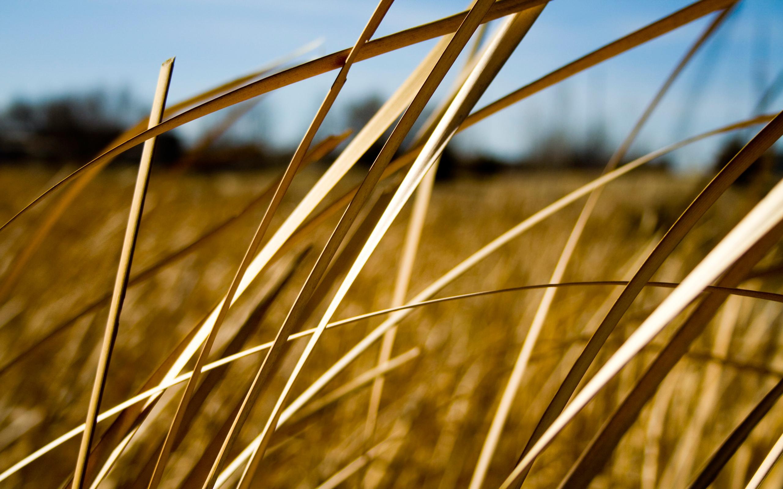 grass wallpaper summer