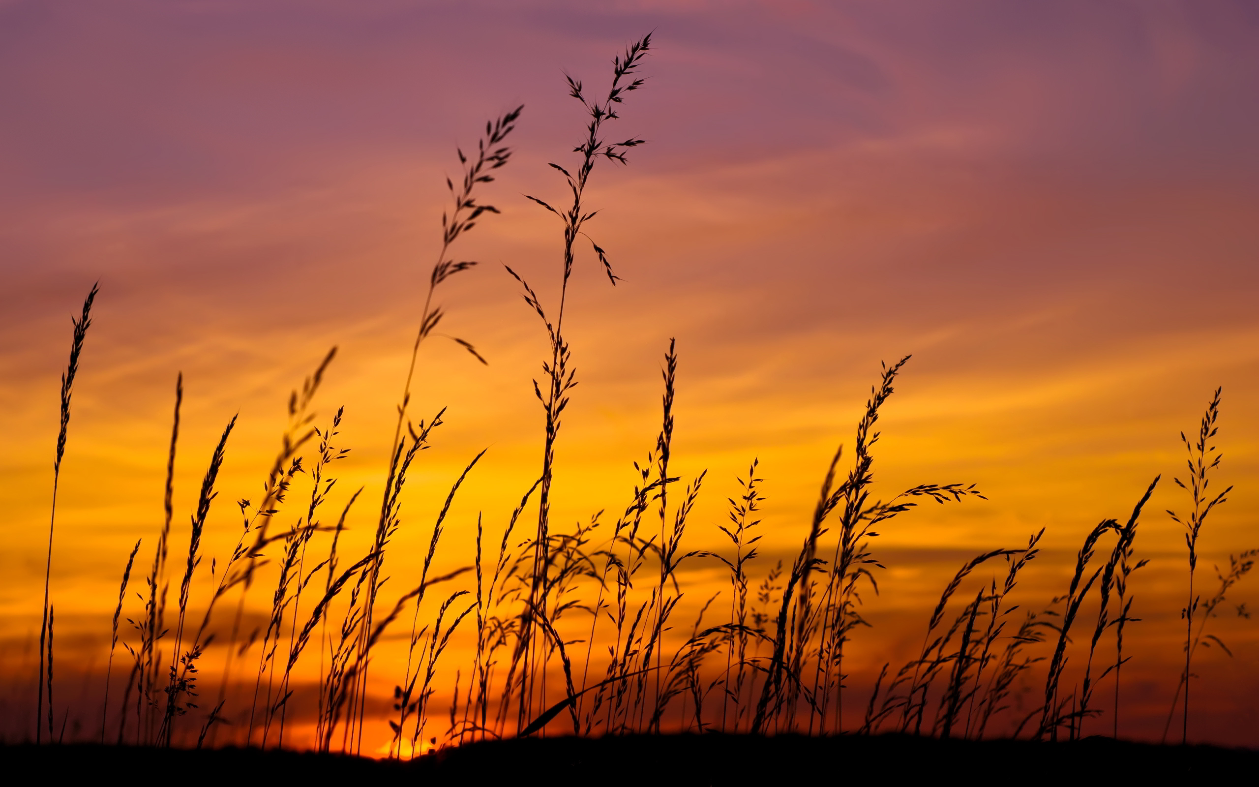 grass wallpaper sunset hd