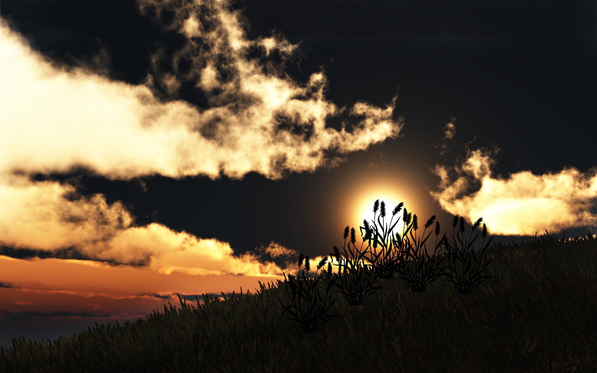 grass wallpaper sunset