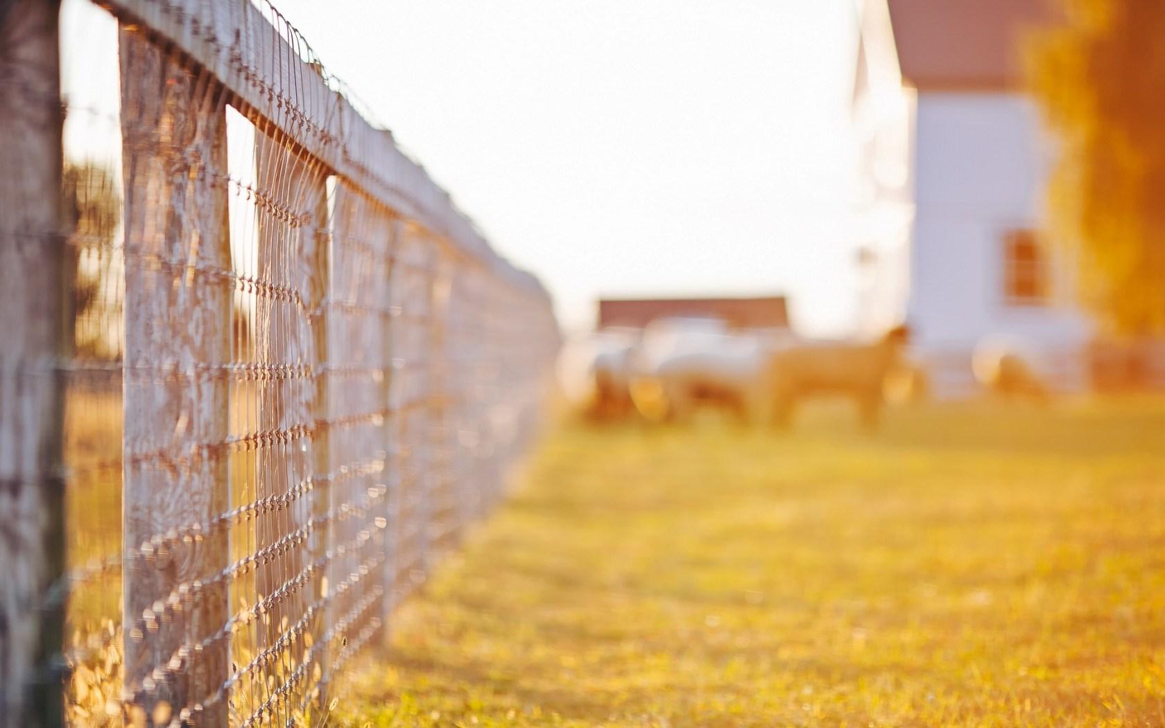 grass wallpaper sunshine