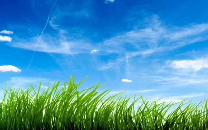 grass wallpaper wide