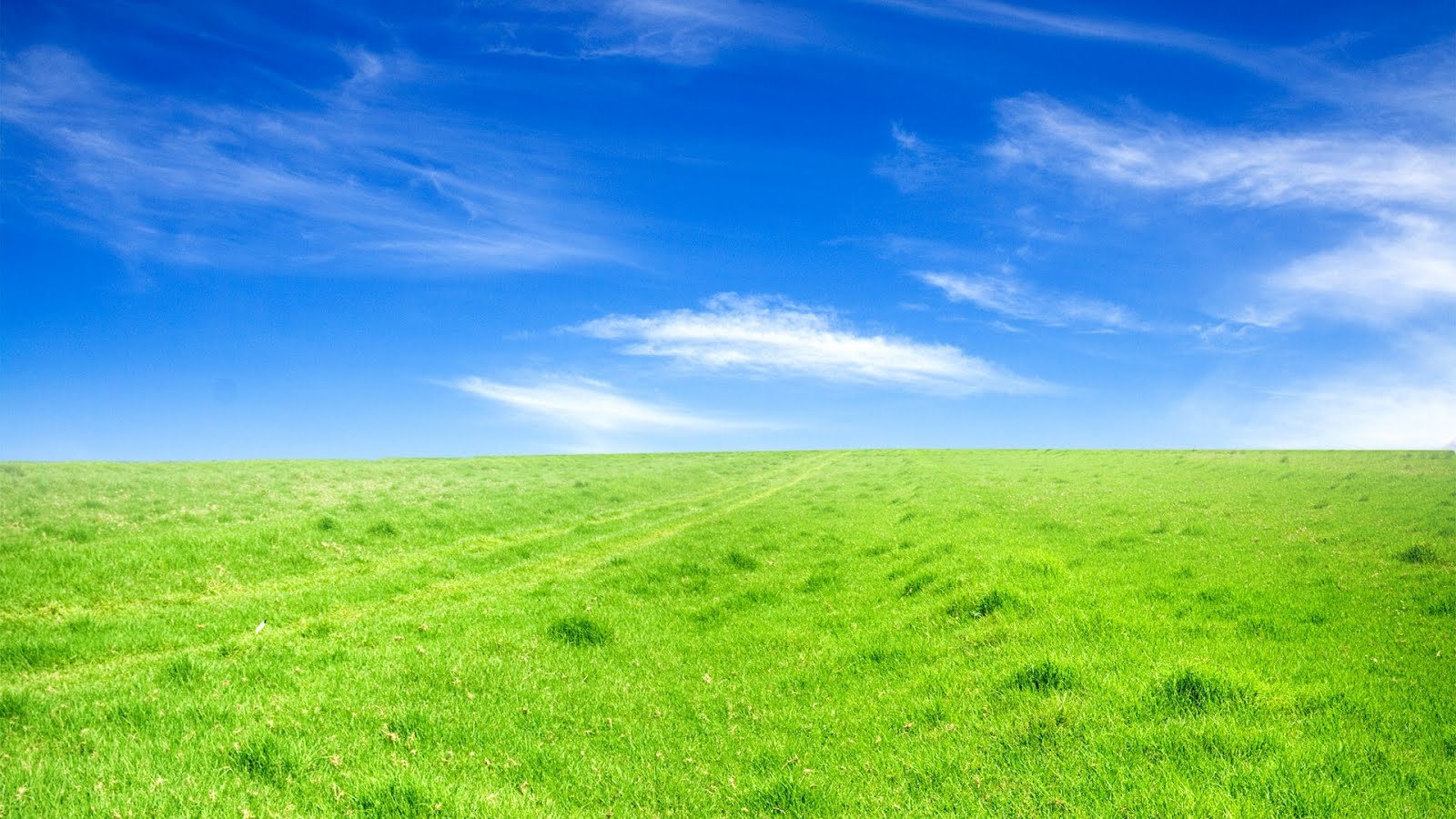 grass wallpaper windows