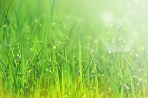 grass wallpapers great
