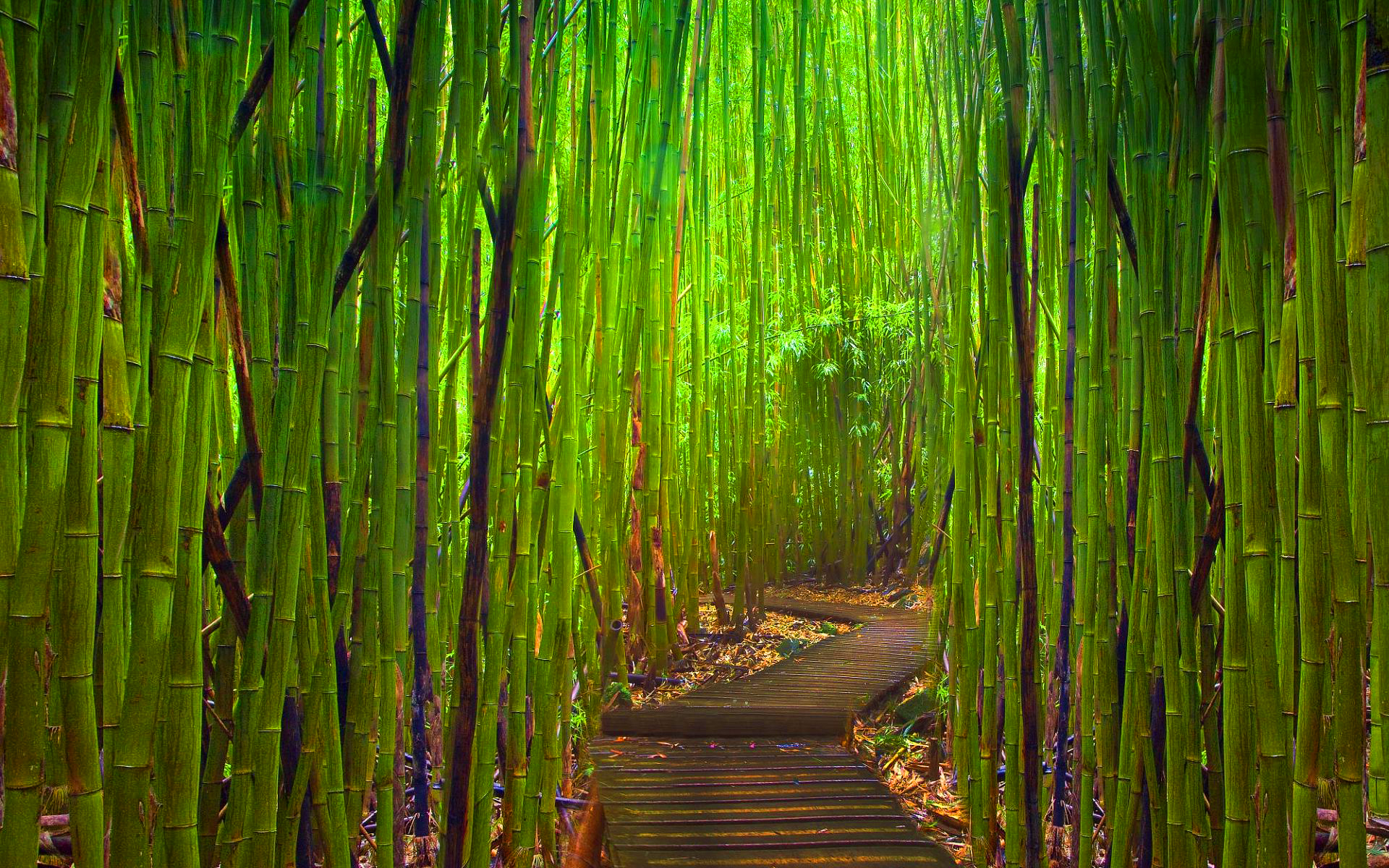 green babmboo forest