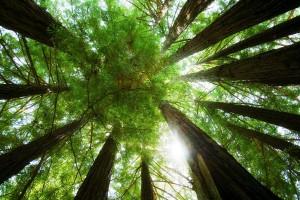 green dense forest