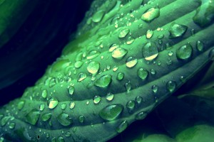 green dew drops