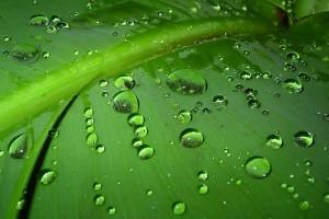 green dew drops images