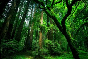 green forest