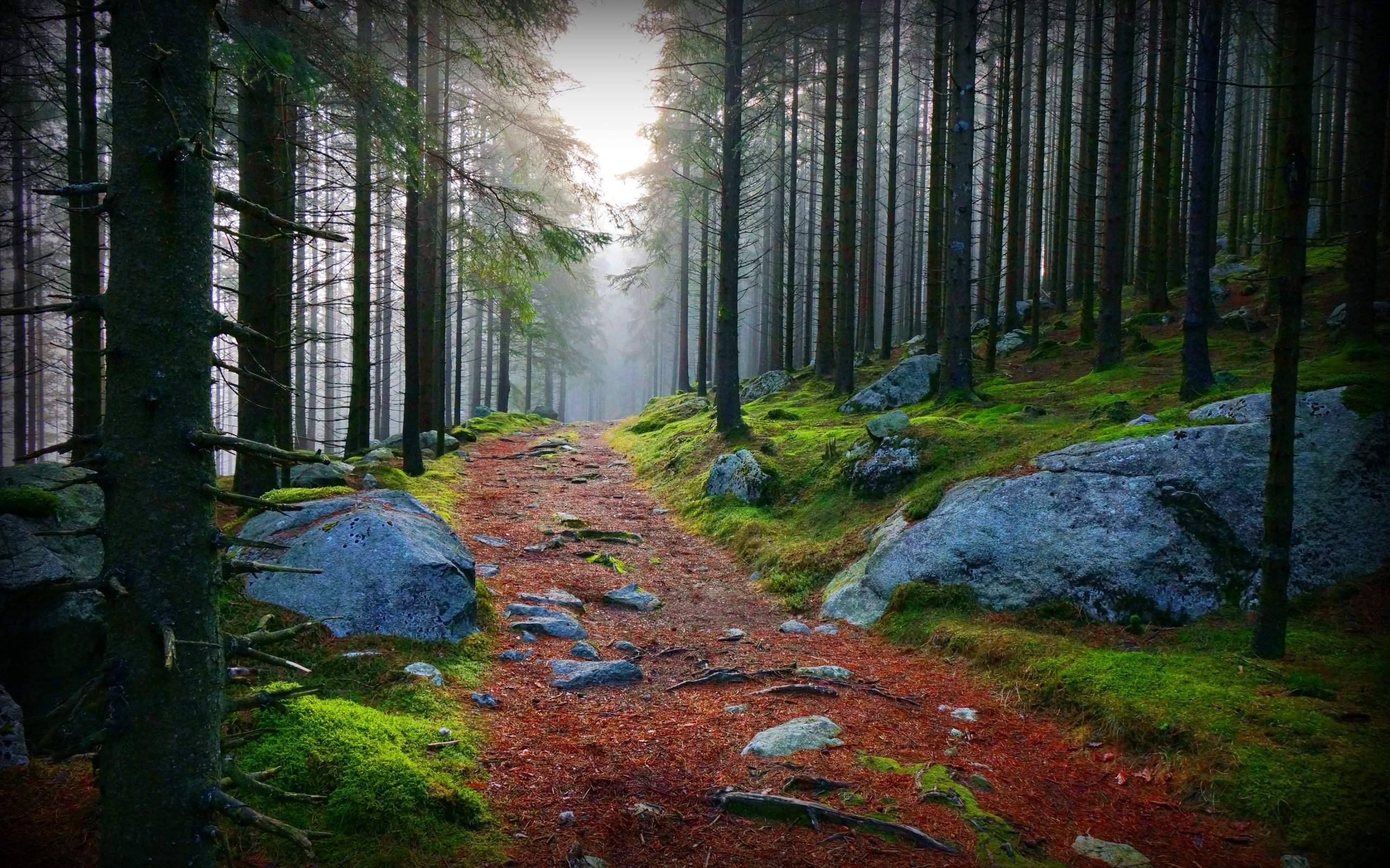 Forest 4k Quality Iphone Wallpaper: Green Forest Hd Wallpaper Path - HD Desktop Wallpapers