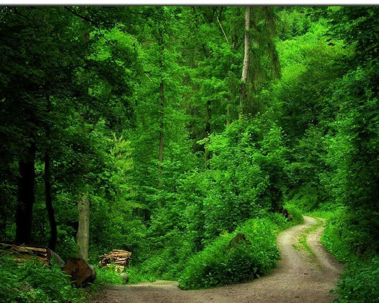 green forest wallpapers hd1
