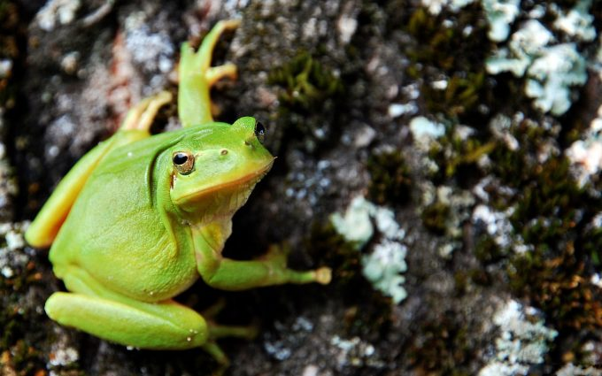 green frog 1080p