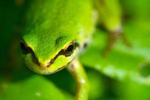 green frog leaves wallpaper