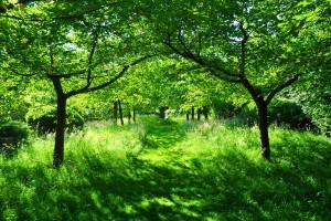 green garden widescreen