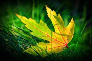 green leaf beautiful