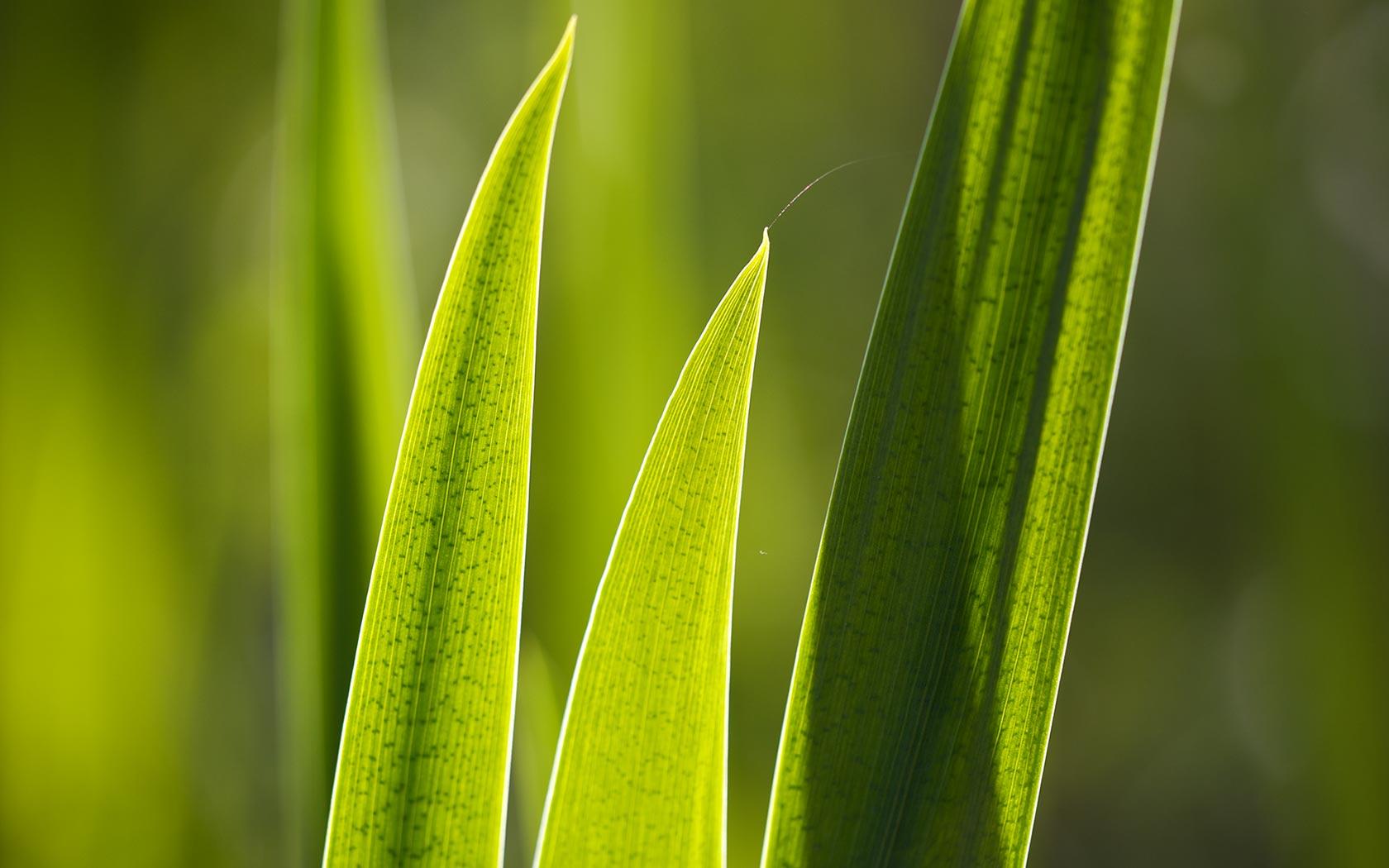 green leaf desktop background