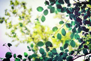 green leaves hd