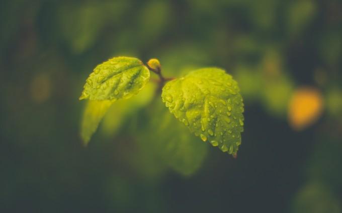 green leaves jungle
