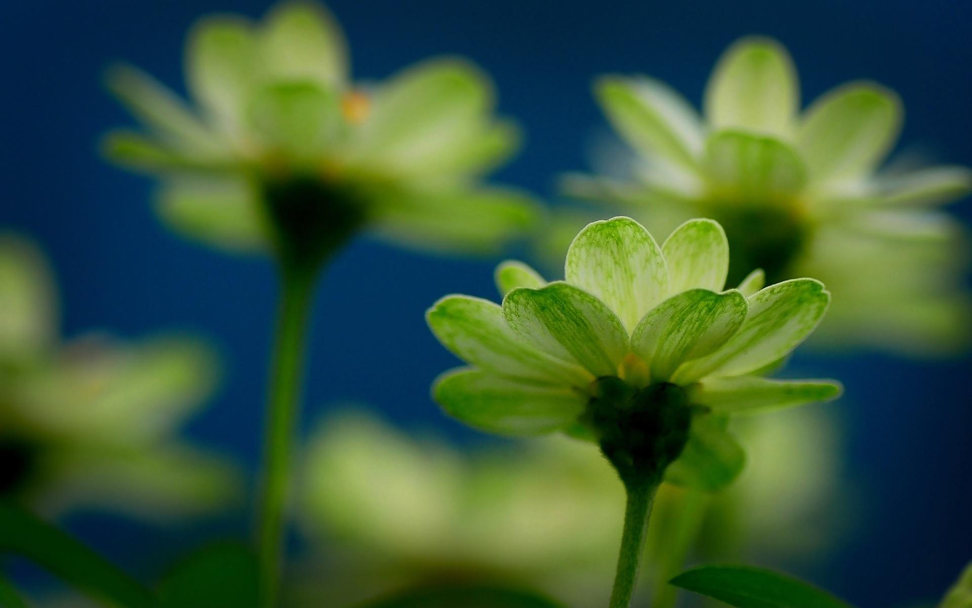 green macro flowers