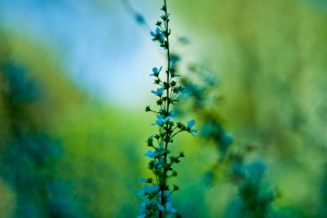 green macro photography