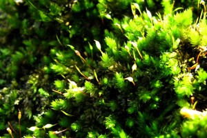 green macro pictures