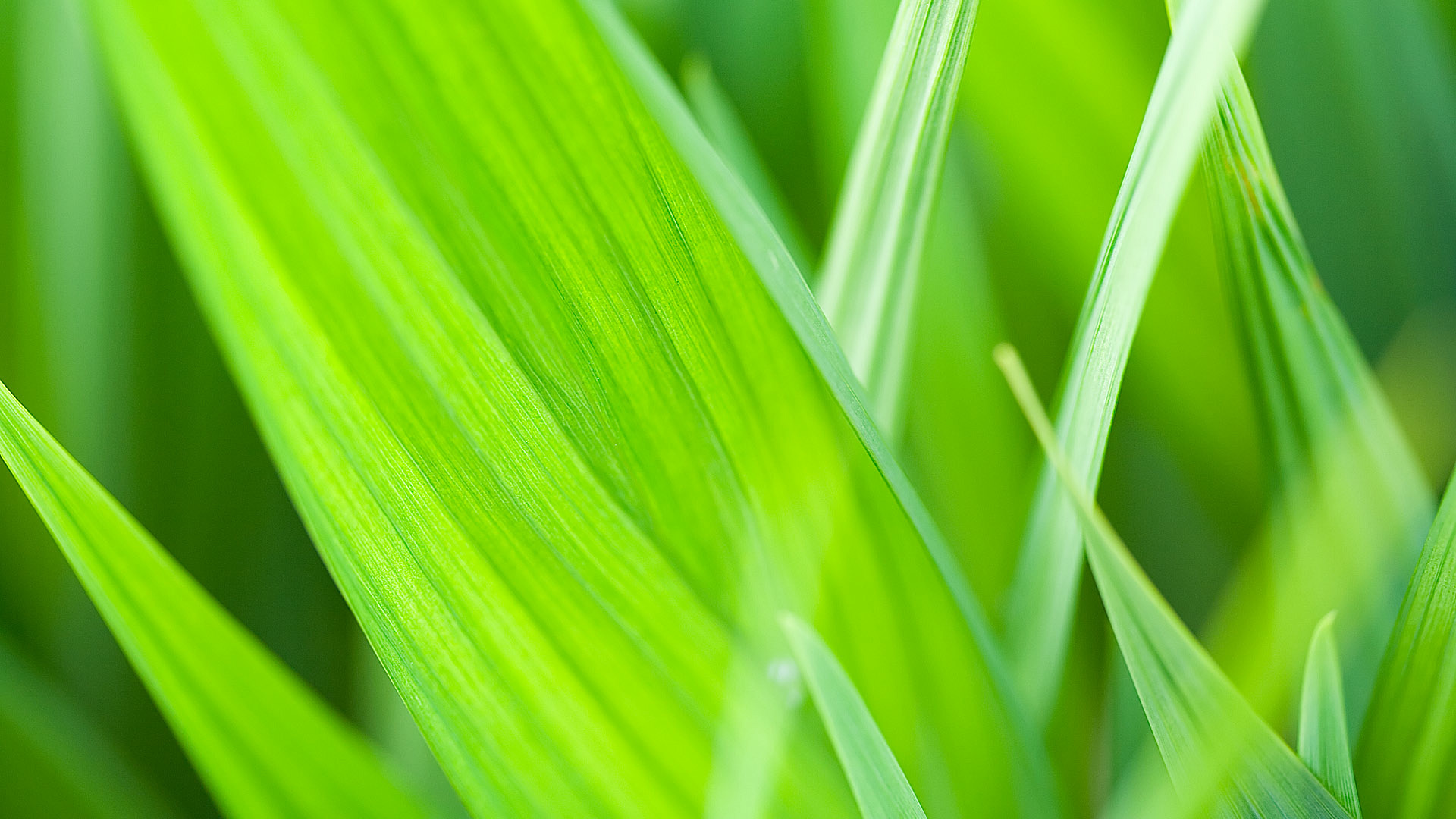 green macro wallpaper