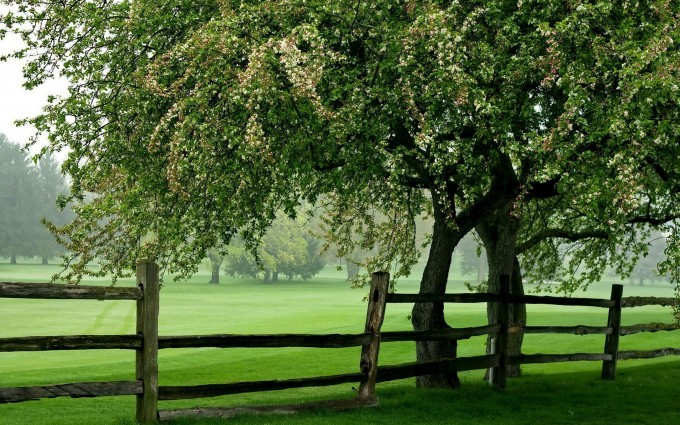 green meadow 1080p