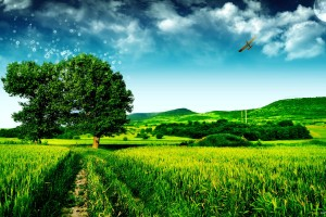 green scenery picture