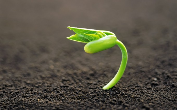 green sprout download