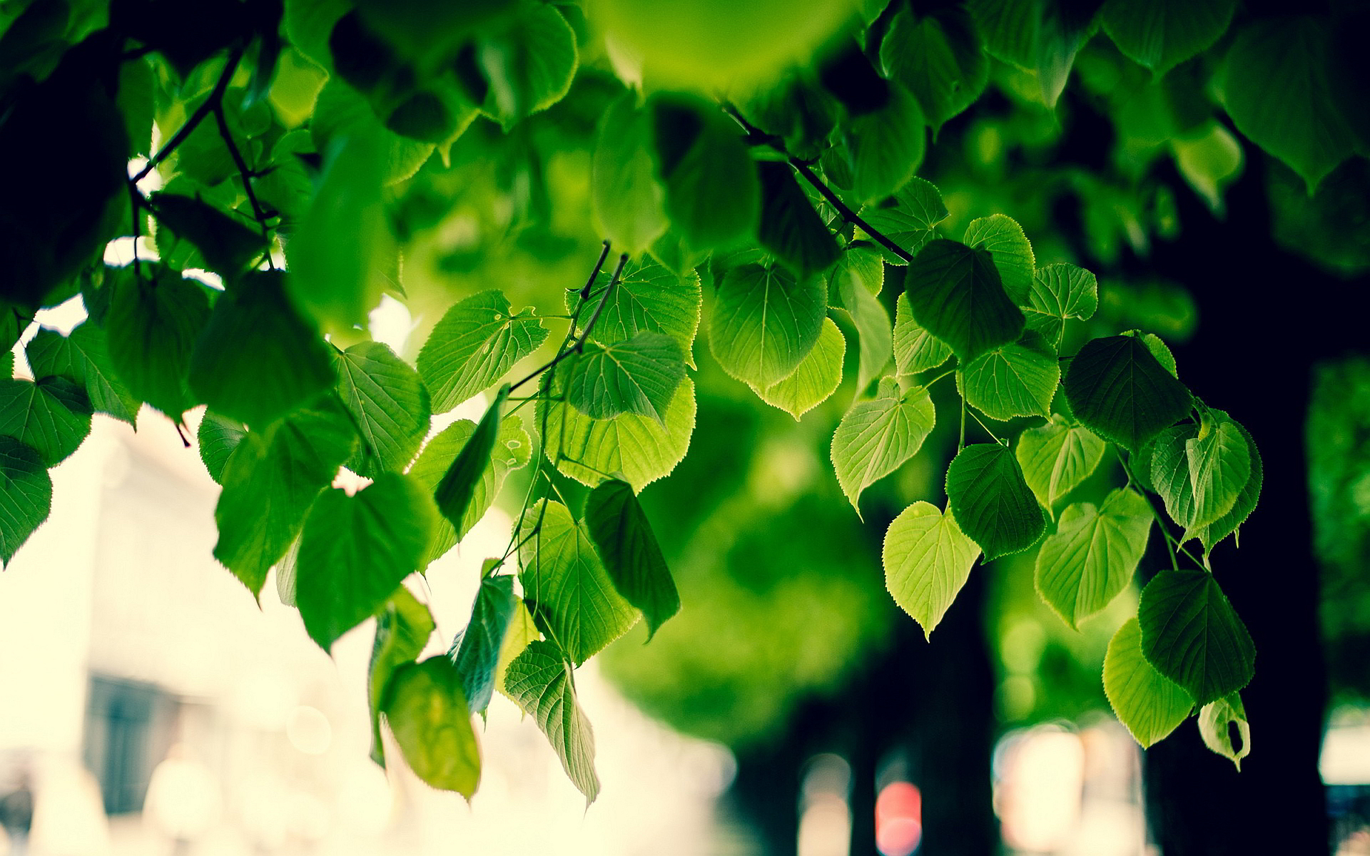 green tree images hd