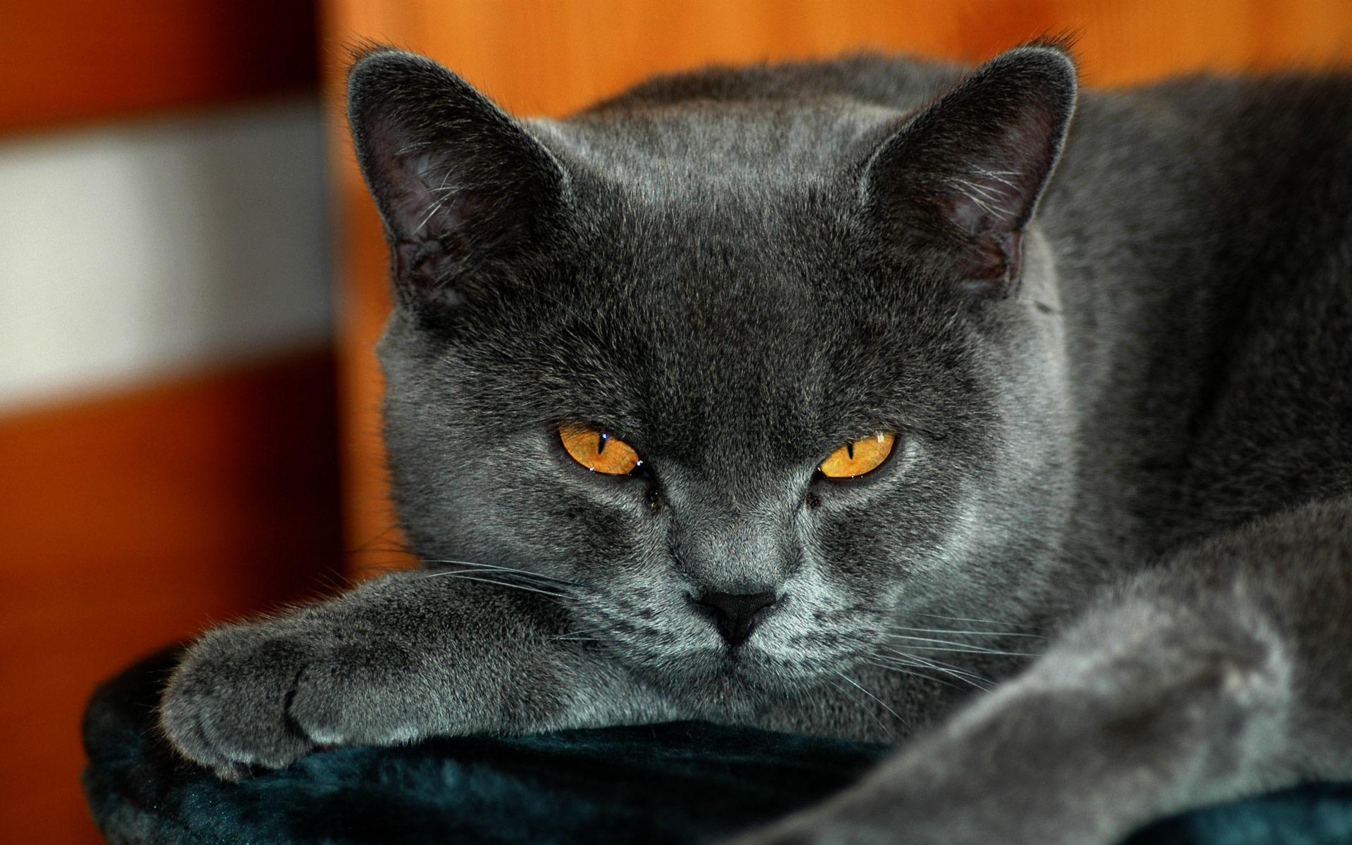 grey cat eyes