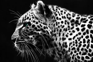 grey leopard print wallpaper