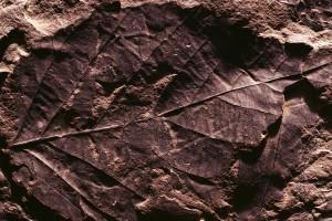 ground wallpaper leaf