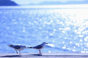 gull wallpaper 1080p