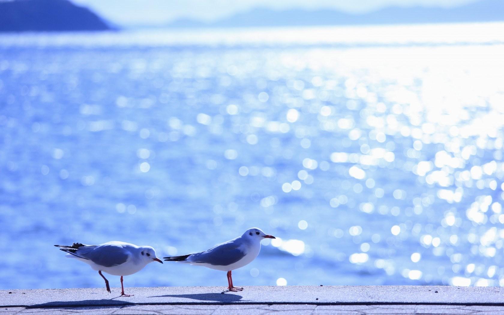 gull wallpaper 1080p
