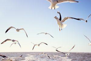 gull wallpaper beautiful