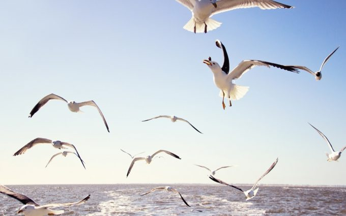 gull wallpaper beautiful