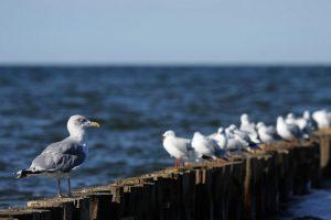 gull wallpaper download