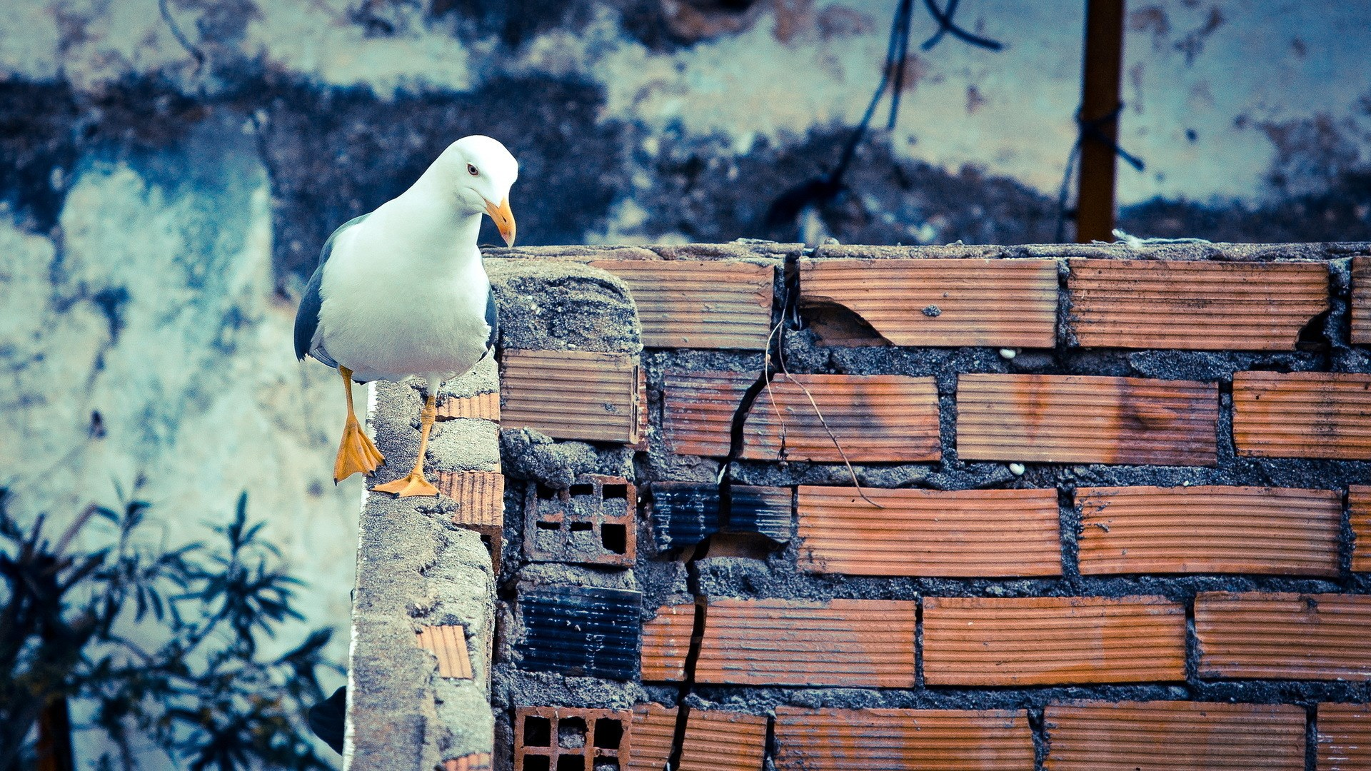 gull wallpapers hd