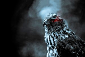 hawk image A2