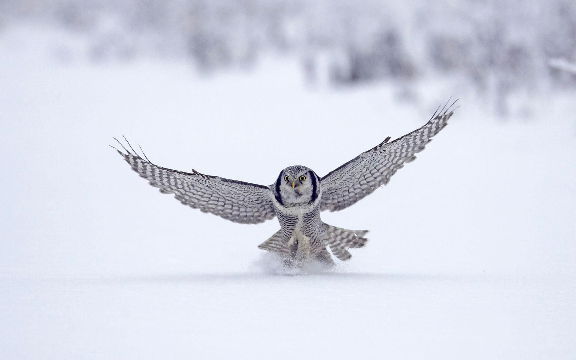 hawk image
