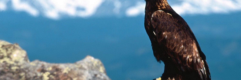 hawk hd wallpaper - photo #30