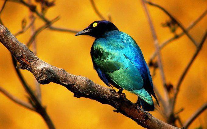hd bird images