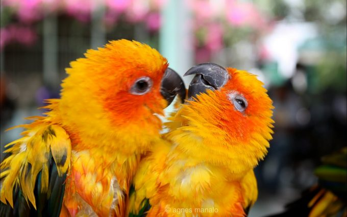 hd birds pictures
