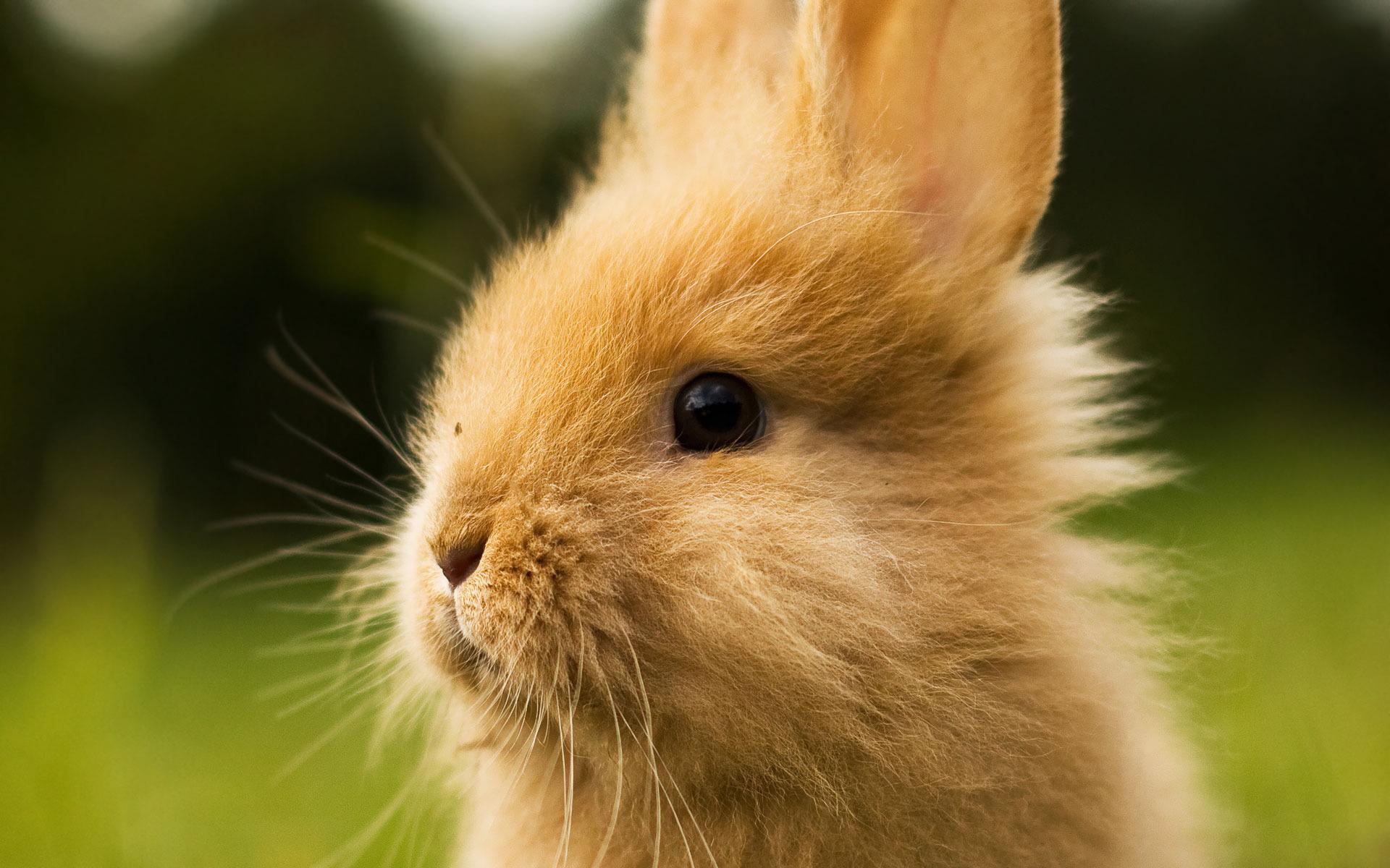 hd bunny