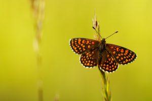 hd butterfly wallpaper download