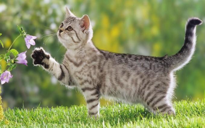 hd cat picture
