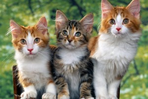 hd cat pictures