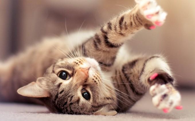 hd cute cat wallpaper